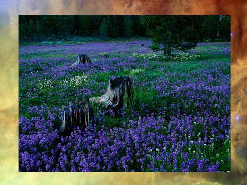 Le Zen, Cest simplement Sasseoir, Sans pensée, En oubliant Le corps et lesprit. DôgenZenji