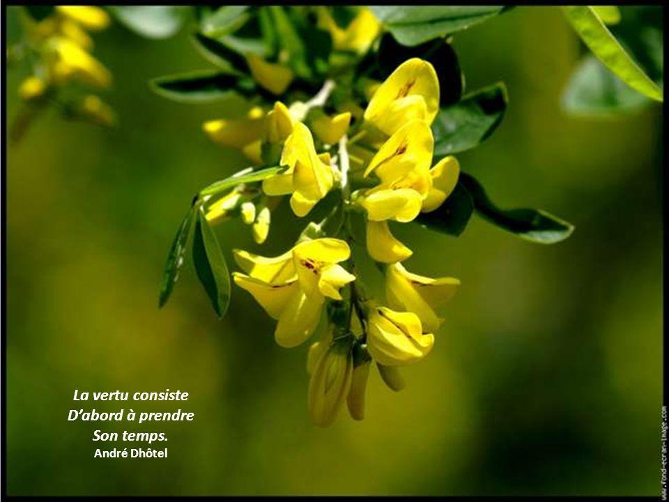 Jaime la tranquillité plus que toutes Les choses de ce monde. Je perçois dans les quiétudes des choses Un chant immense et muet. Pablo Neruda