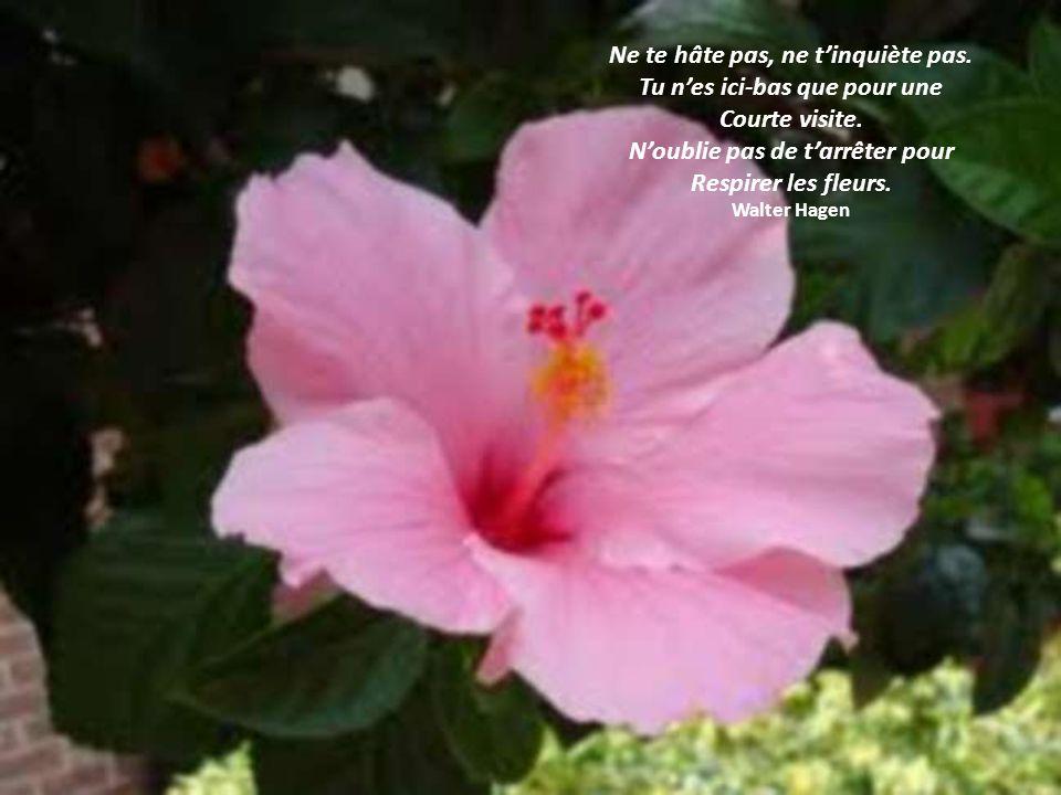 Un esprit paisible nest pas Synonyme desprit vide de pensées, De sensations et démotions. Un esprit paisible Nest pas un esprit absent. Thich Nhat Han