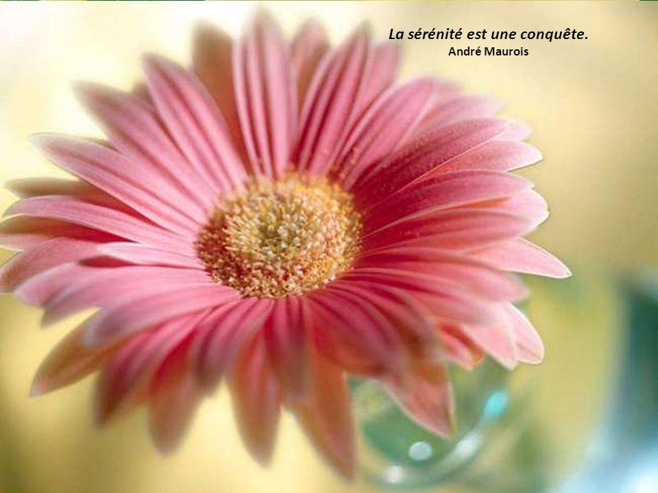 De temps en temps, Il faut se reposer de ne rien faire. Jean Cocteau