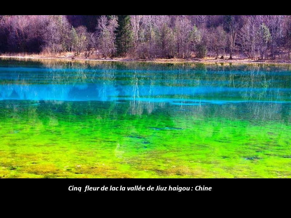 Champs de Fleurs de Canola-Yunnan : Chine