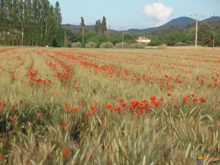 Merci, oh douce fleur de notre douce France Qui allume en nos cœurs nos souvenirs d enfance ! Offres-nous vos beautés, étalez vos splendeurs, Réjouiss