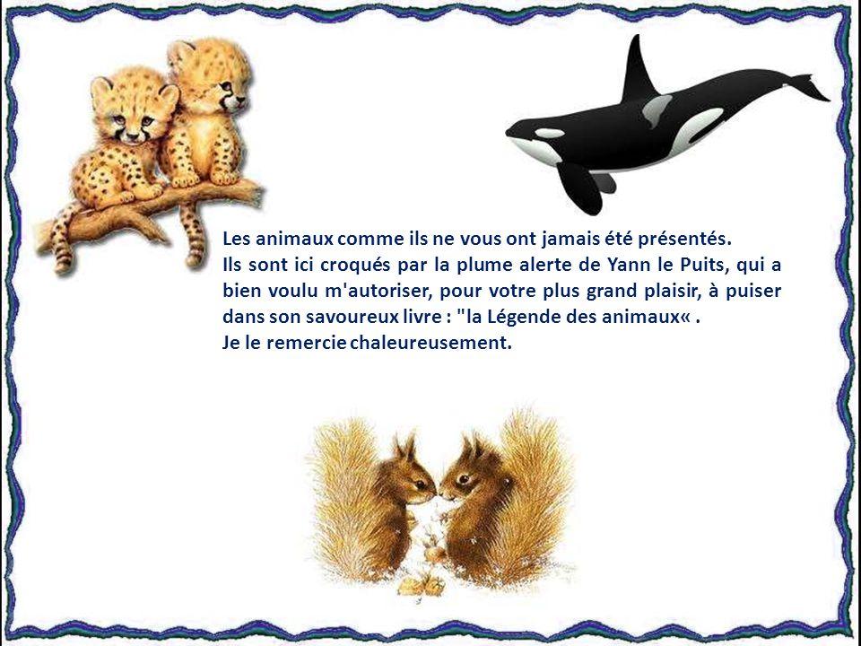 Yann Le Puits Diaporama de Jacky Questel