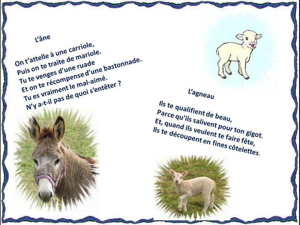 La cigale La joyeuse cigale Au temps estival Donne son festival Et se régale.