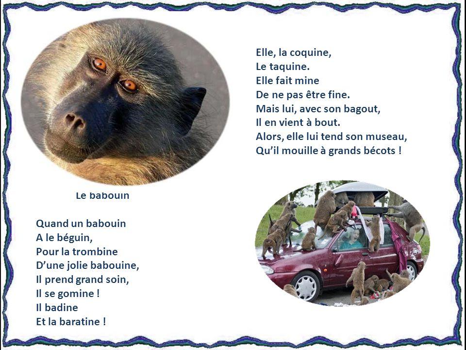 Le babouin Quand un babouin A le béguin, Pour la trombine Dune jolie babouine, Il prend grand soin, Il se gomine .