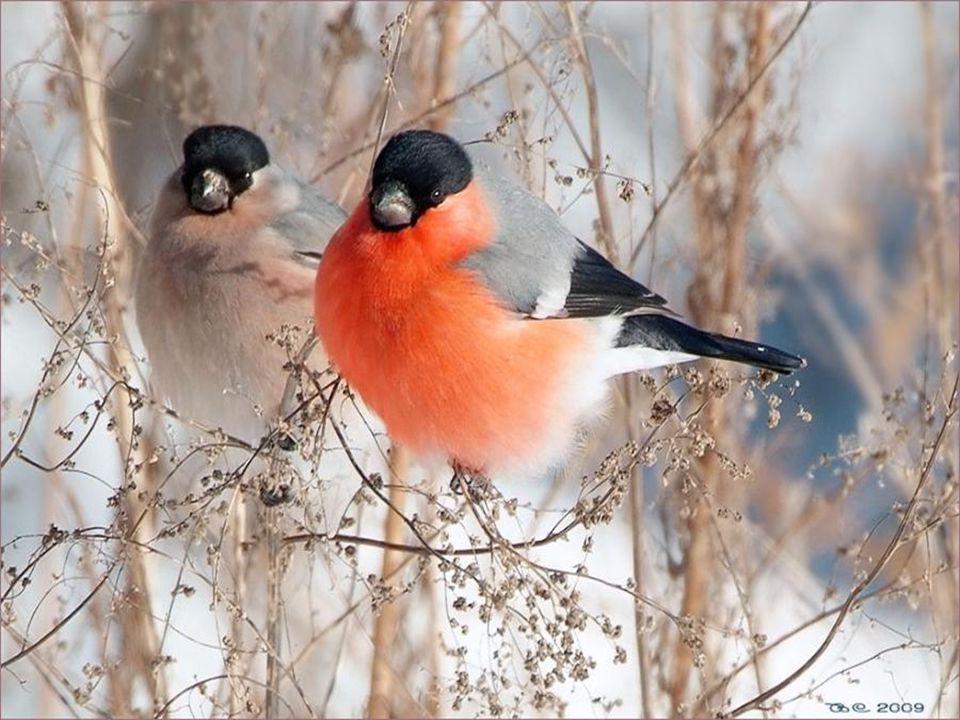 Puissent dautres saisons maccorder un répit, Jaime où je vis heureux, jadmire la nature, Jécoute les oiseaux, jaime ce qui fleurit, Mais, quand le tem