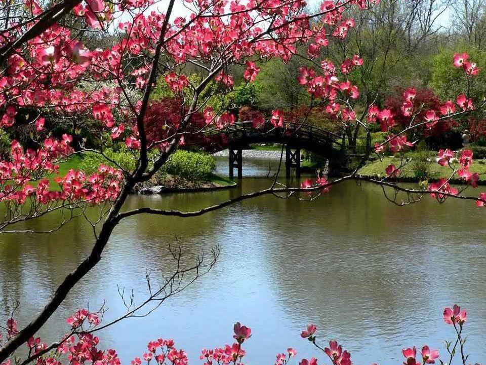 Combien me reste-t-il de printemps à semer Quand le soleil levant dissipe la grisaille? Perce-neige et crocus, plantés dans la rocaille, Seront les to