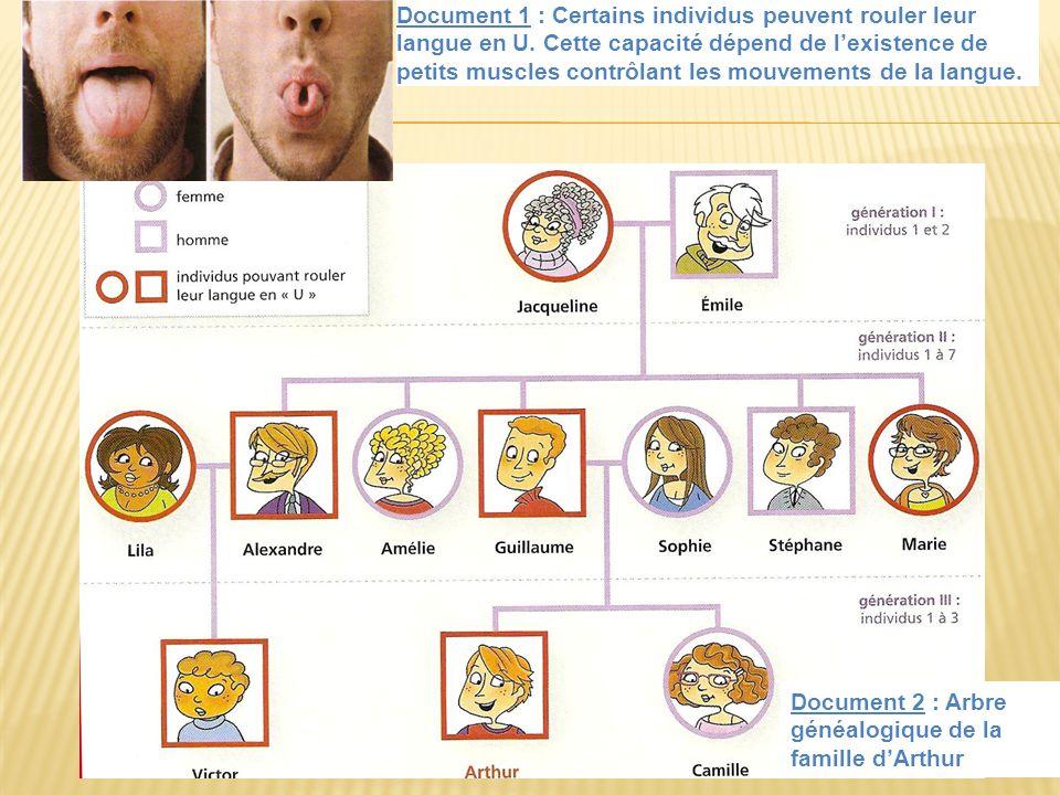 Document 1 : Certains individus peuvent rouler leur langue en U. Cette capacité dépend de lexistence de petits muscles contrôlant les mouvements de la