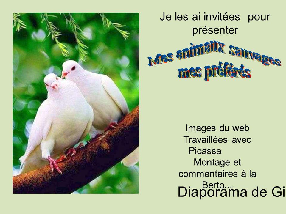 Je les ai invitées pour présenter Images du web Travaillées avec Picassa Montage et commentaires à la Berto...