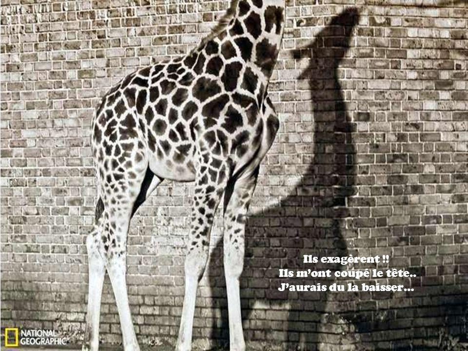 Cest beau une feuille, et dire que les humains ne te regardent parfois même pas !!!