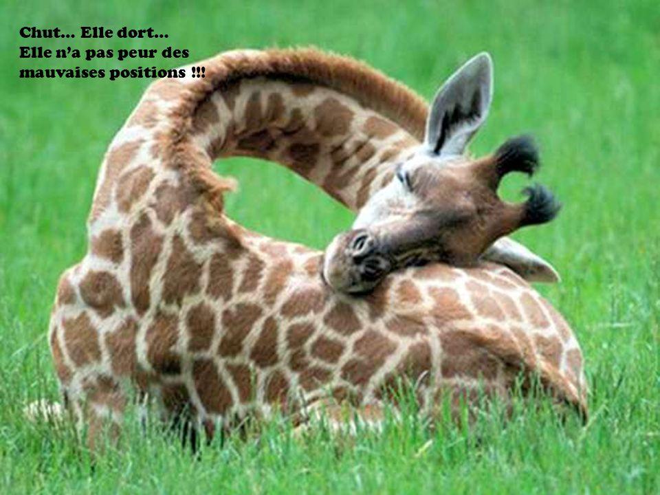 Chut… Elle dort… Elle na pas peur des mauvaises positions !!!