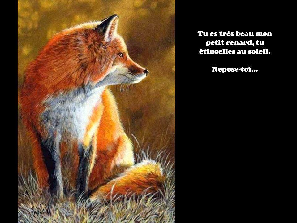 Tu es très beau mon petit renard, tu étincelles au soleil. Repose-toi…