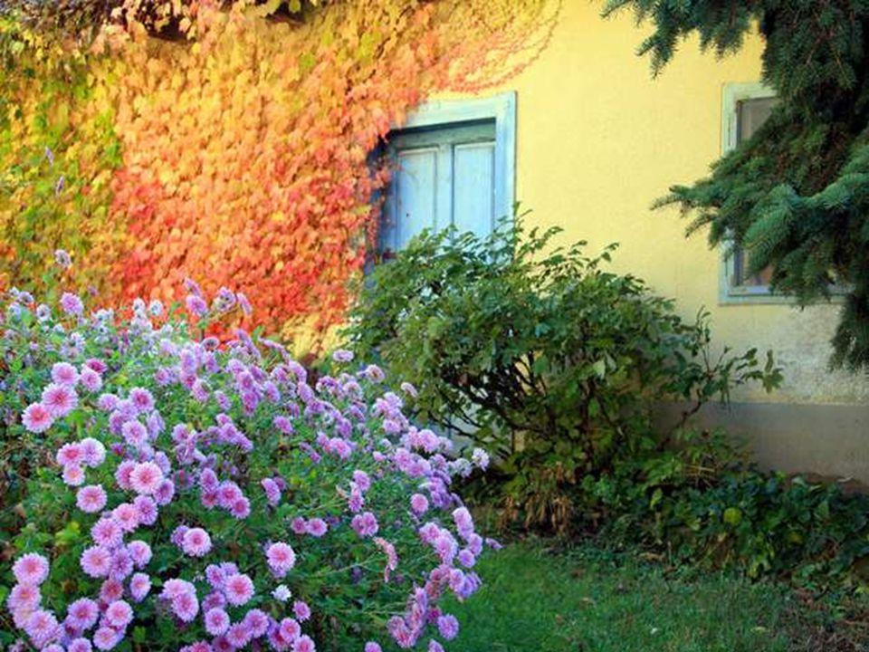 Cest une bien jolie fleur à cultiver, Elle avive les couleurs de lamitié, Offrant plein de petits bonheurs, Gonflant ainsi tant de cœurs.