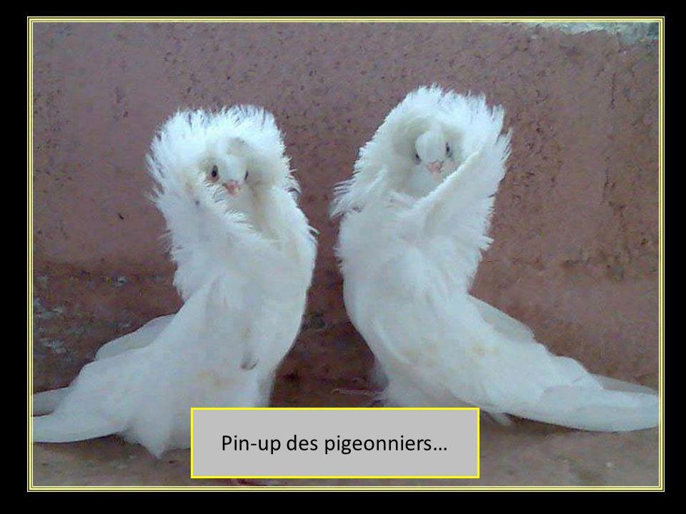 Danseuse en tutu: En attente de chorégraphe !!! Kamel Ouali… tes libre ou quoi !