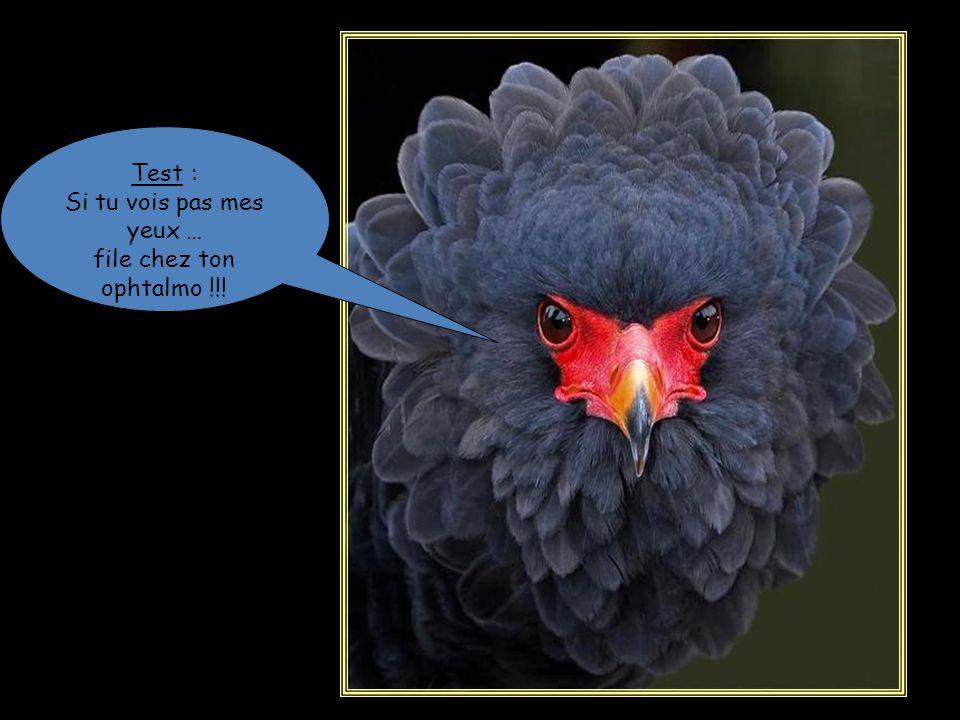 Le nouvel oiseau @... Ya encore du boulot, mon gars…