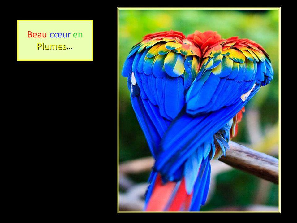 Beau cœur en Plumes Plumes…