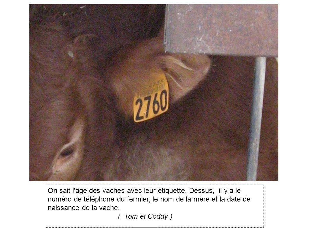 On sait l âge des vaches avec leur étiquette.