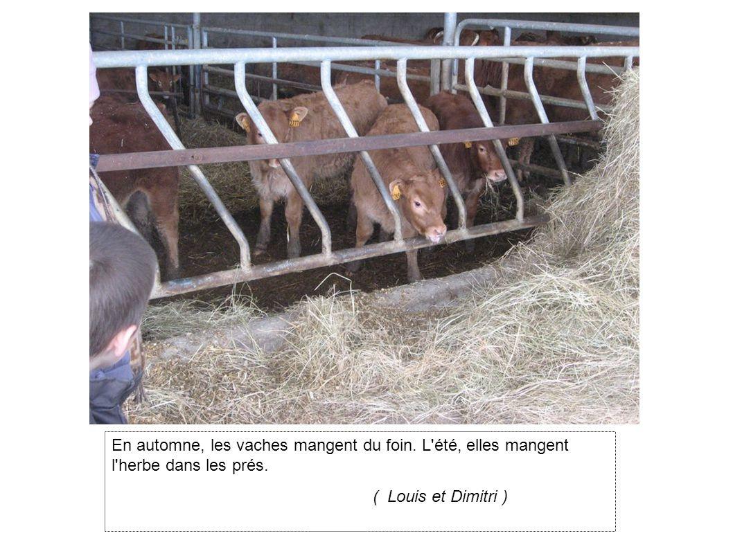 En automne, les vaches mangent du foin.L été, elles mangent l herbe dans les prés.