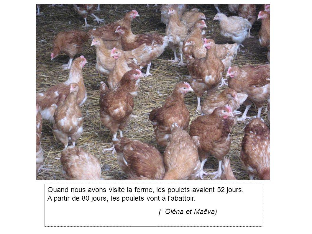 Quand nous avons visité la ferme, les poulets avaient 52 jours.