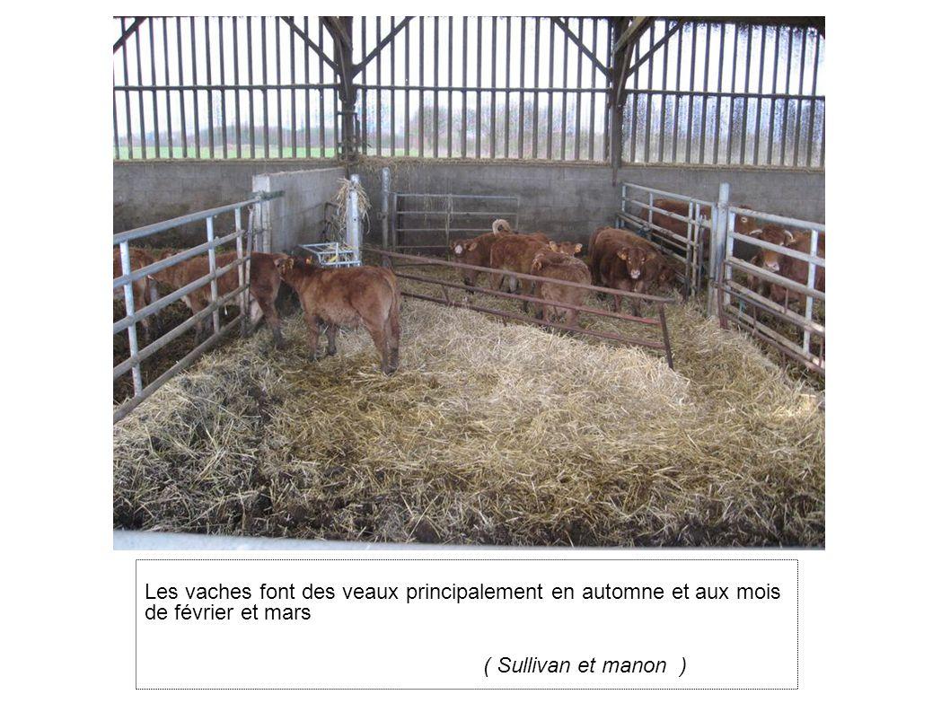 Les vaches font des veaux principalement en automne et aux mois de février et mars ( Sullivan et manon )