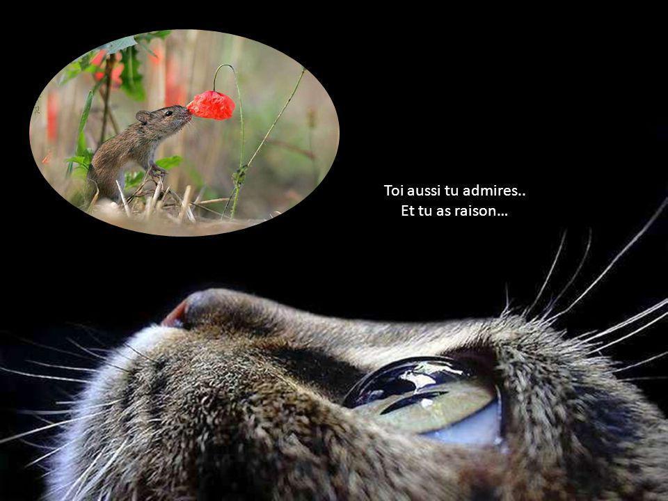 En admiration…