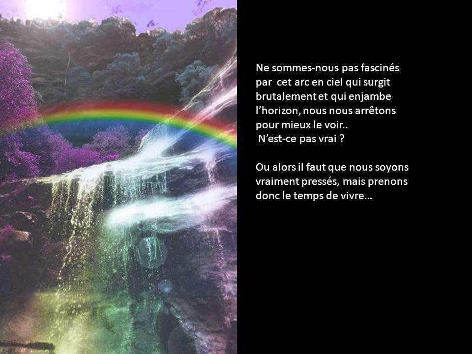 « Tout est calme et volupté… »
