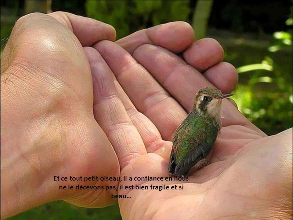 Essayons de voir larc en ciel qui est dans loeil de notre ami Il brille pour nous Regardons bien et si nous ne le voyons pas, saurons- nous un jour tout lamour quil a pour nous