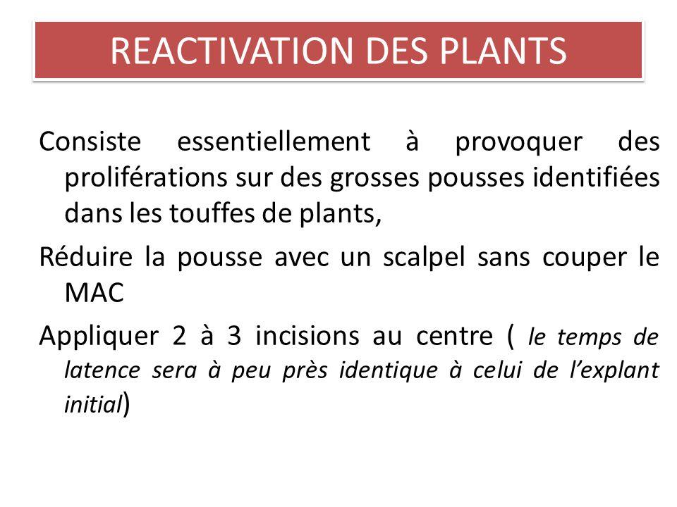 PLANTULE SEVREE