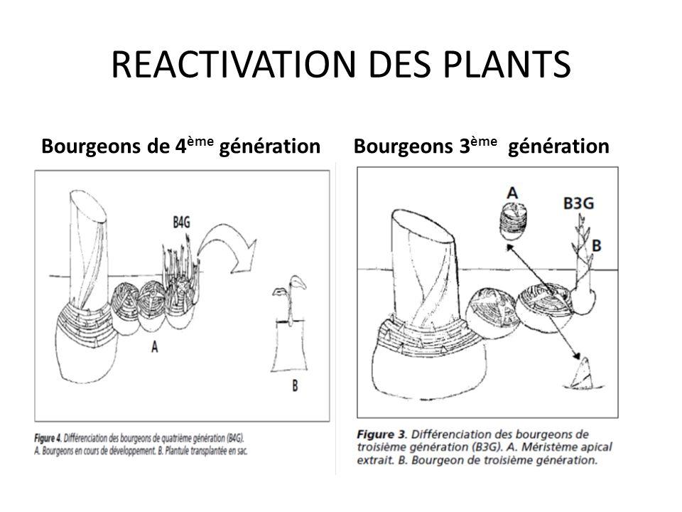 REACTIVATION DES PLANTS 2 ème génération1 ère génération