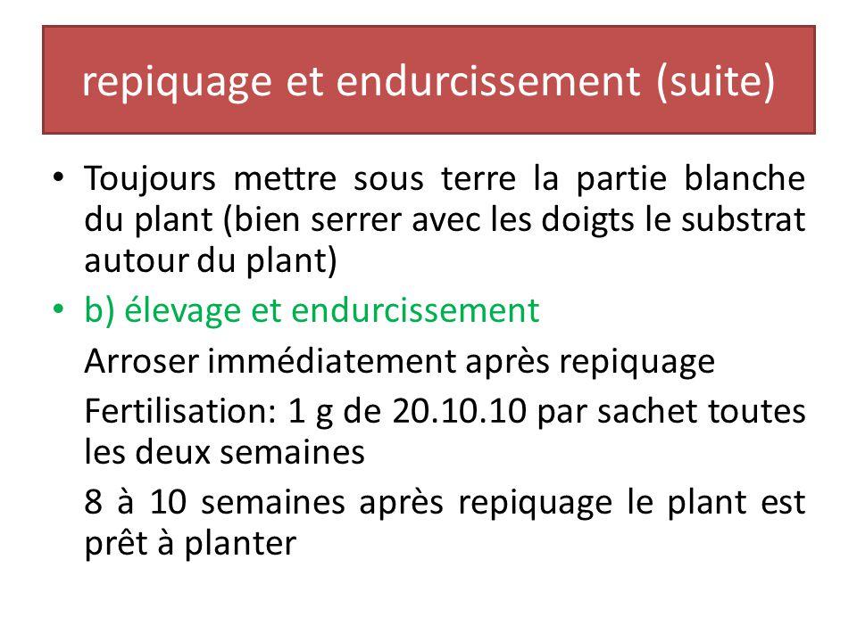 7- repiquage et endurcissement a) repiquage Repiquer les plants sevrés sous ombrière après tri, dans des sachets dun contenu de 1 litre en moyenne( sa