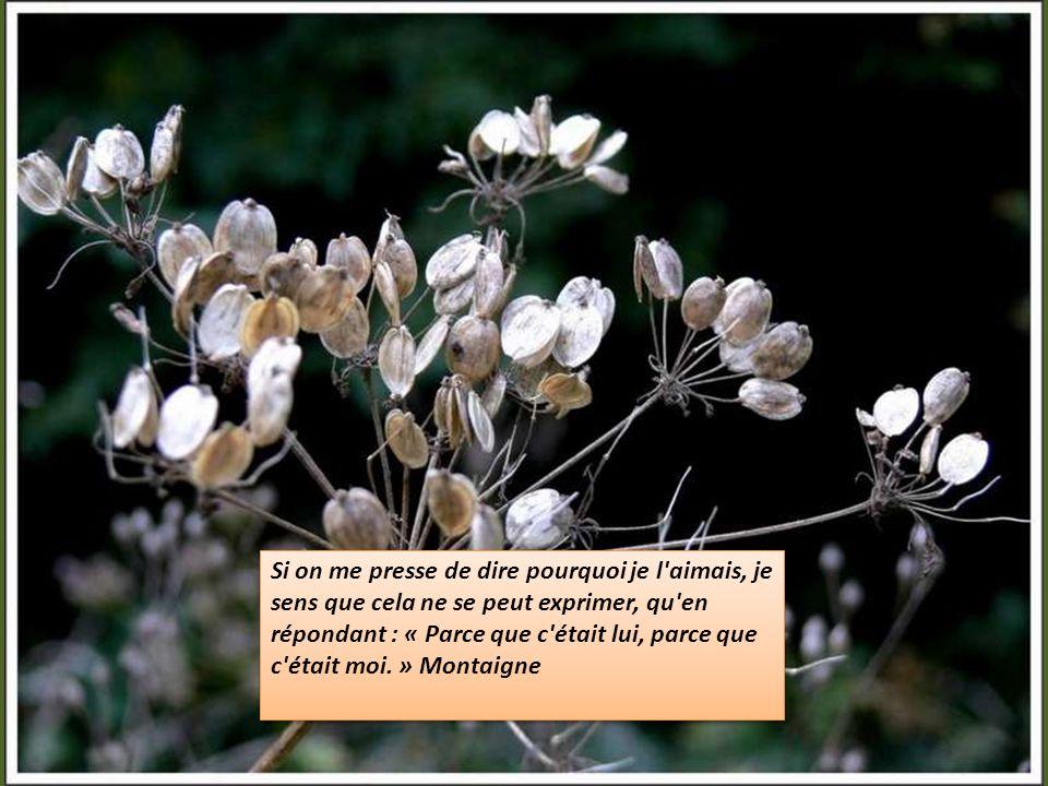 Lamour est une mer dont la femme est la rive. Victor Hugo