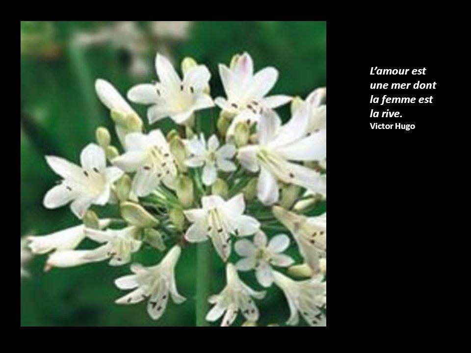 Lamour ne voit pas avec les yeux, mais avec lâme. William Shakespeare