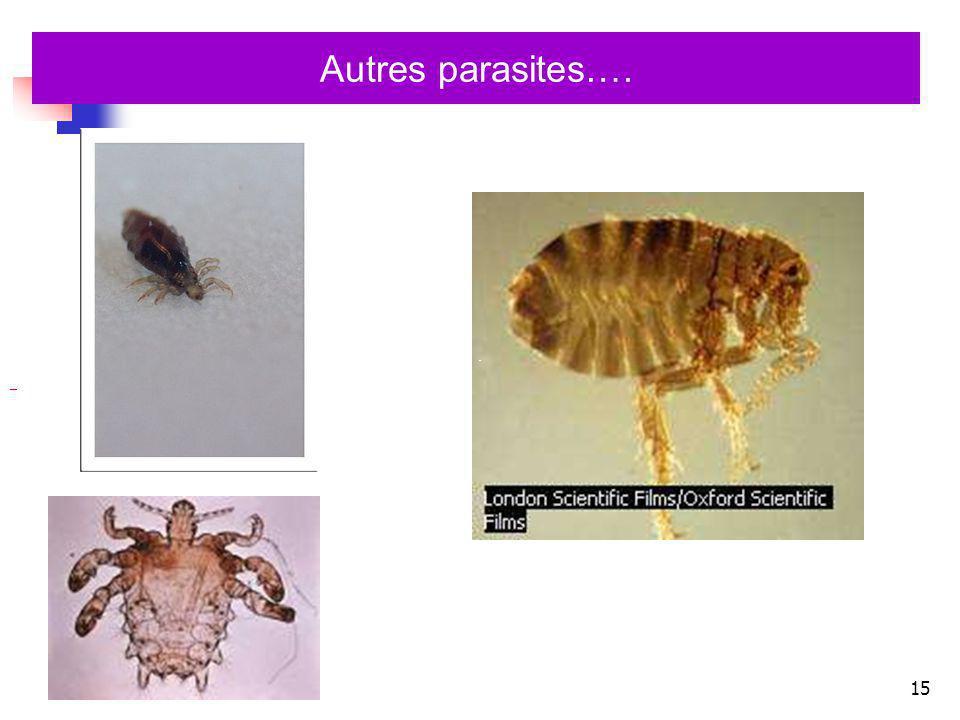 15 Autres parasites….