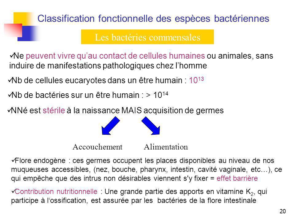 20 Classification fonctionnelle des espèces bactériennes Les bactéries commensales Nb de cellules eucaryotes dans un être humain : 10 13 Nb de bactéri