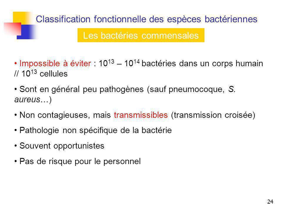24 Les bactéries commensales Impossible à éviter : 10 13 – 10 14 bactéries dans un corps humain // 10 13 cellules Sont en général peu pathogènes (sauf
