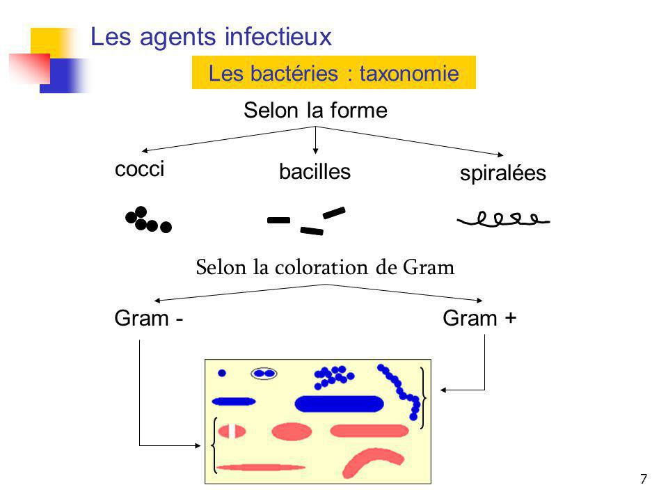 7 Les agents infectieux Les bactéries : taxonomie Selon la forme cocci bacilles spiralées Selon la coloration de Gram Gram -Gram +