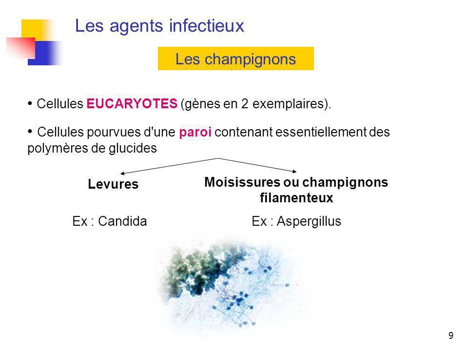 9 Les agents infectieux Les champignons Cellules EUCARYOTES (gènes en 2 exemplaires). Cellules pourvues d'une paroi contenant essentiellement des poly