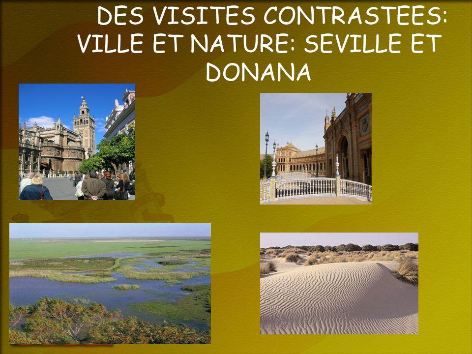 DES VISITES CONTRASTEES: VILLE ET NATURE: SEVILLE ET DONANA