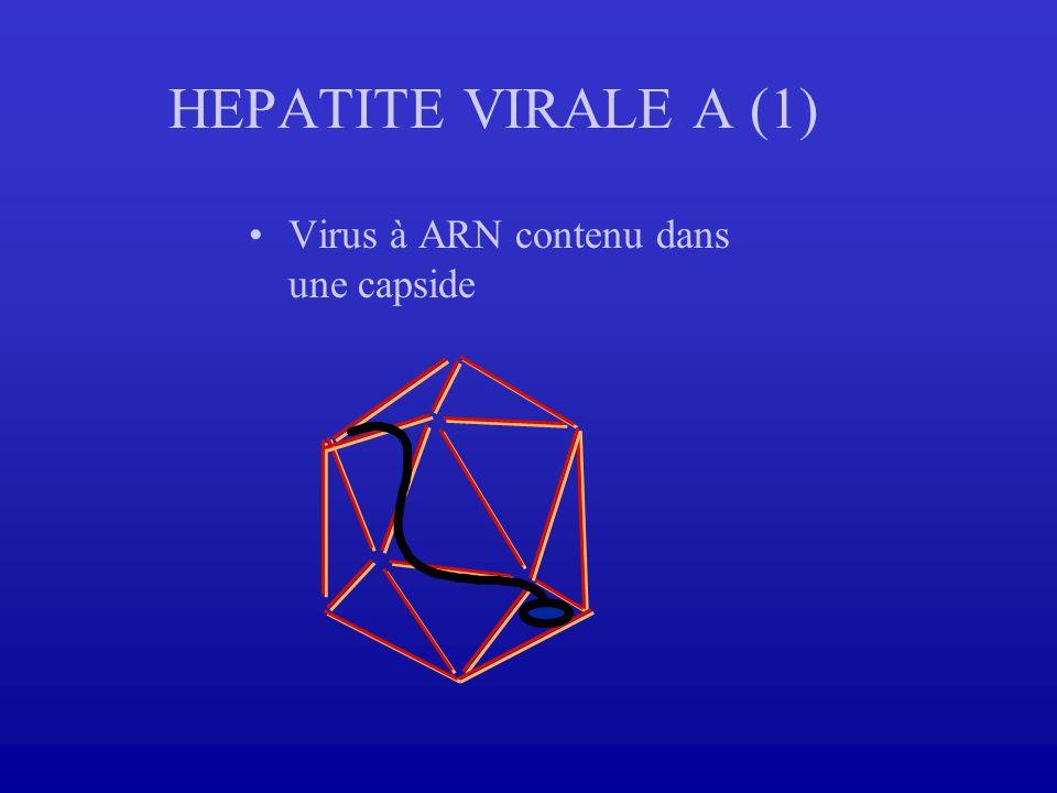 HEPATITE VIRALE A (1) Virus à ARN contenu dans une capside