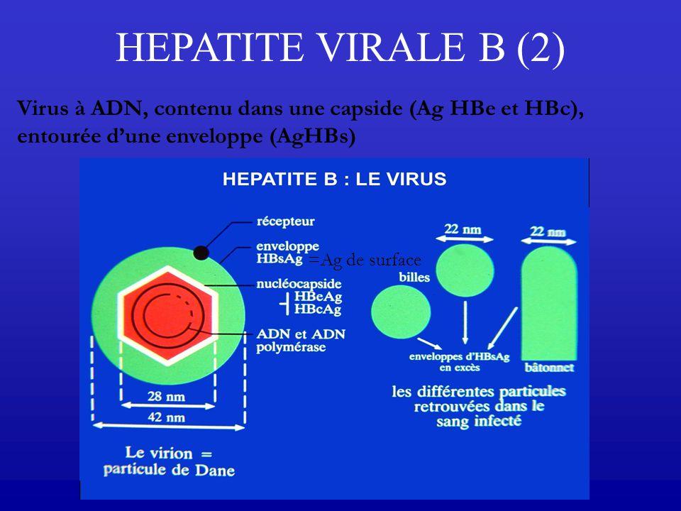 Virus à ADN, contenu dans une capside (Ag HBe et HBc), entourée dune enveloppe (AgHBs) HEPATITE VIRALE B (2) =Ag de surface