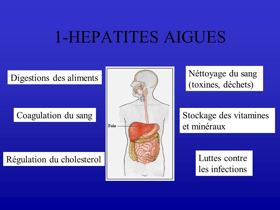 1-HEPATITES AIGUES Digestions des aliments Coagulation du sang Régulation du cholesterol Néttoyage du sang (toxines, déchets) Stockage des vitamines e