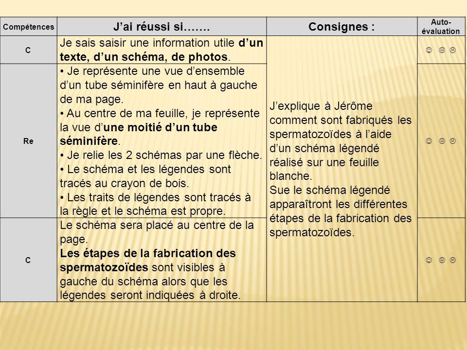 Compétences Jai réussi si…….Consignes : Auto- évaluation C Je sais saisir une information utile dun texte, dun schéma, de photos.