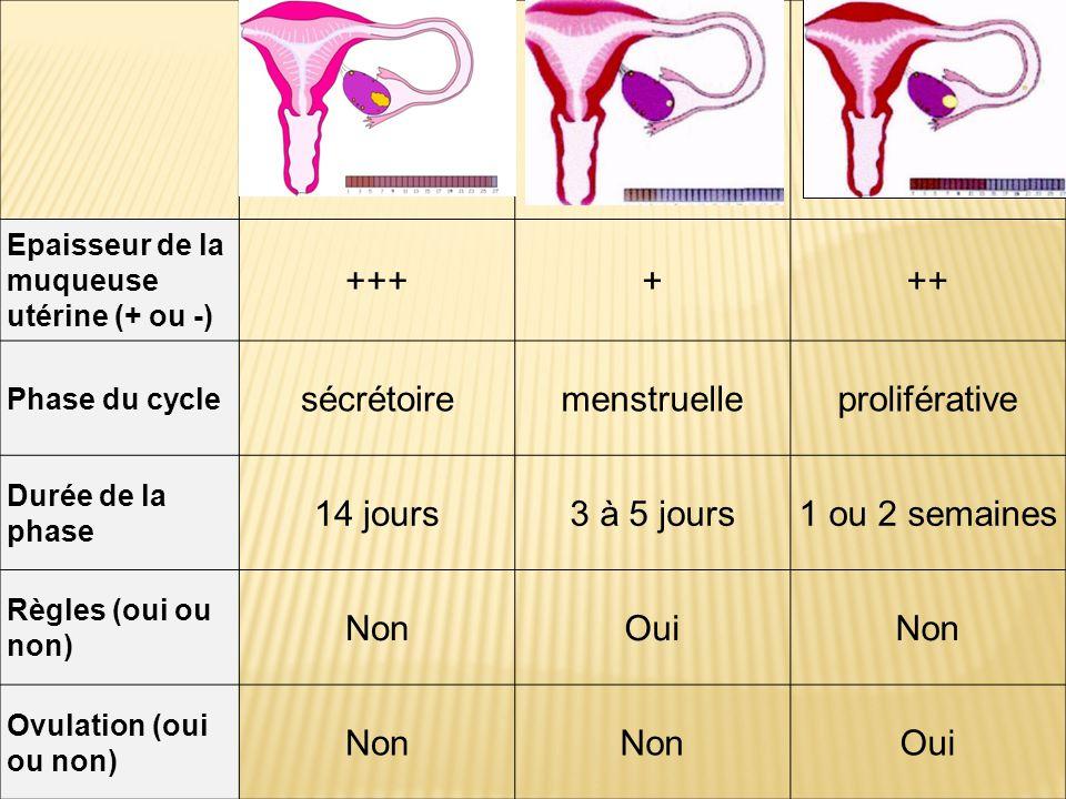Epaisseur de la muqueuse utérine (+ ou -) ++++++ Phase du cycle sécrétoiremenstruelleproliférative Durée de la phase 14 jours3 à 5 jours1 ou 2 semaines Règles (oui ou non) NonOuiNon Ovulation (oui ou non) Non Oui