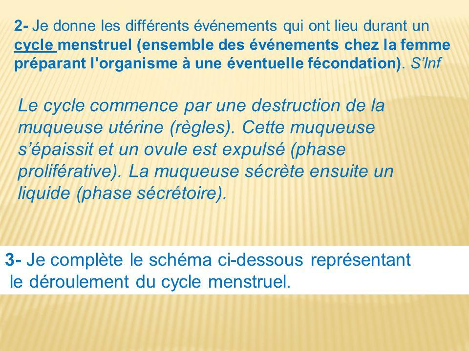 2- Je donne les différents événements qui ont lieu durant un cycle menstruel (ensemble des événements chez la femme préparant l'organisme à une éventu