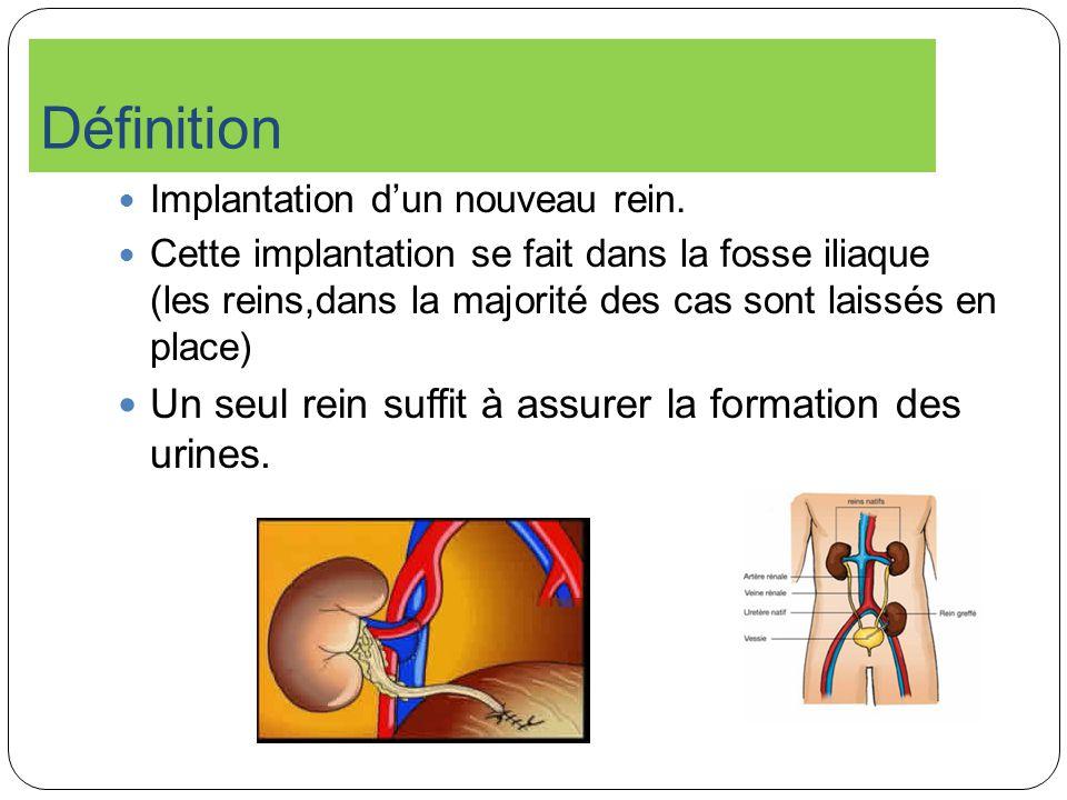 Définition Implantation dun nouveau rein. Cette implantation se fait dans la fosse iliaque (les reins,dans la majorité des cas sont laissés en place)