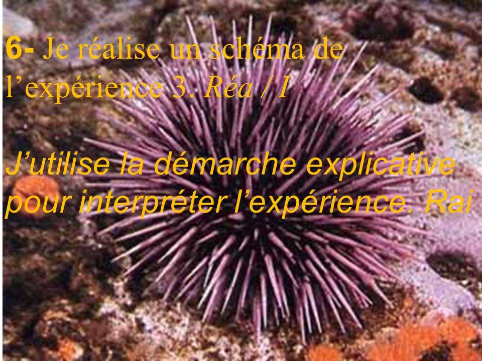 Expérience 3 : Une expérience complémentaire. Si on dépose sur une lame une goutte deau de mer contenant des spermatozoïdes doursin, on constate que c