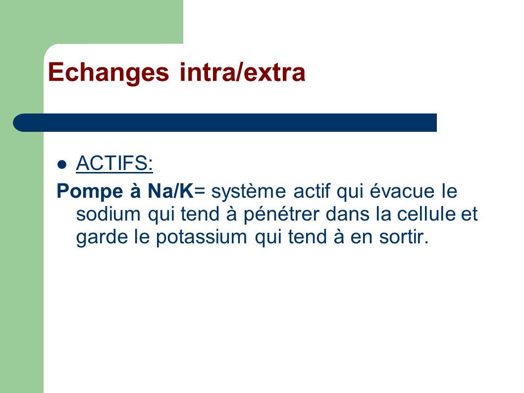 Echanges intra/extra ACTIFS: Pompe à Na/K= système actif qui évacue le sodium qui tend à pénétrer dans la cellule et garde le potassium qui tend à en sortir.