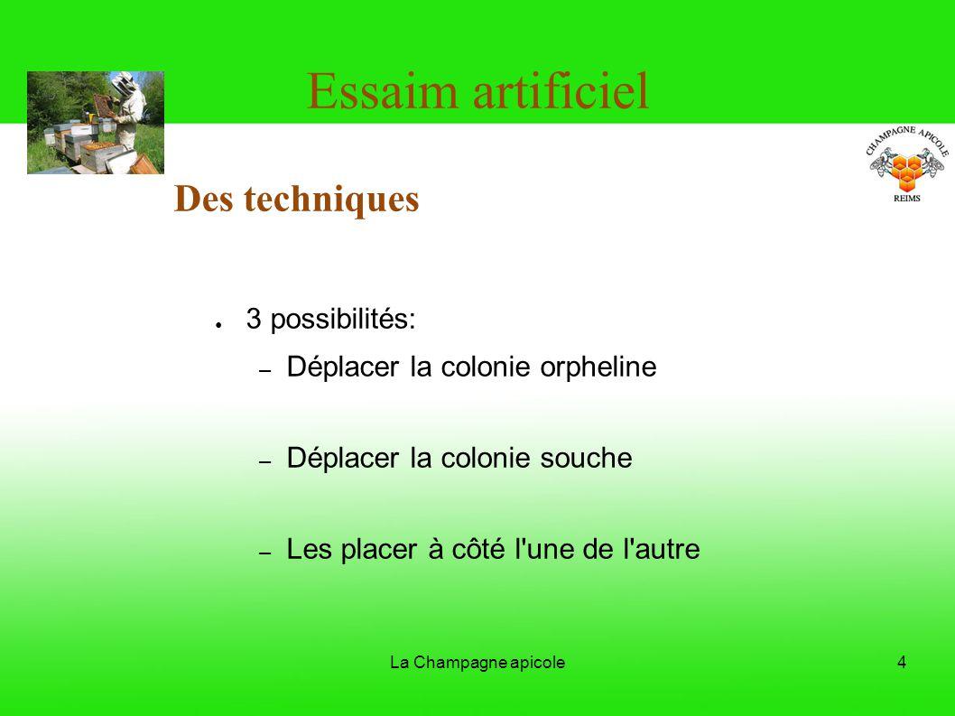 La Champagne apicole4 Essaim artificiel Des techniques 3 possibilités: – Déplacer la colonie orpheline – Déplacer la colonie souche – Les placer à côt