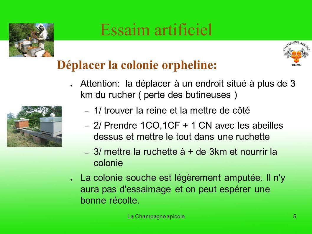 La Champagne apicole5 Essaim artificiel Déplacer la colonie orpheline: Attention: la déplacer à un endroit situé à plus de 3 km du rucher ( perte des