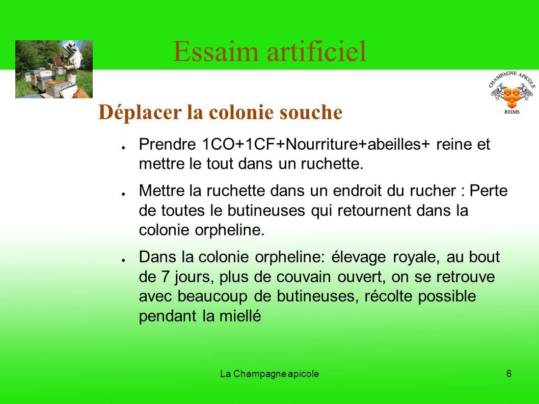 La Champagne apicole6 Essaim artificiel Déplacer la colonie souche Prendre 1CO+1CF+Nourriture+abeilles+ reine et mettre le tout dans un ruchette. Mett